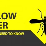 YellowFever Alert: What You Need to Know